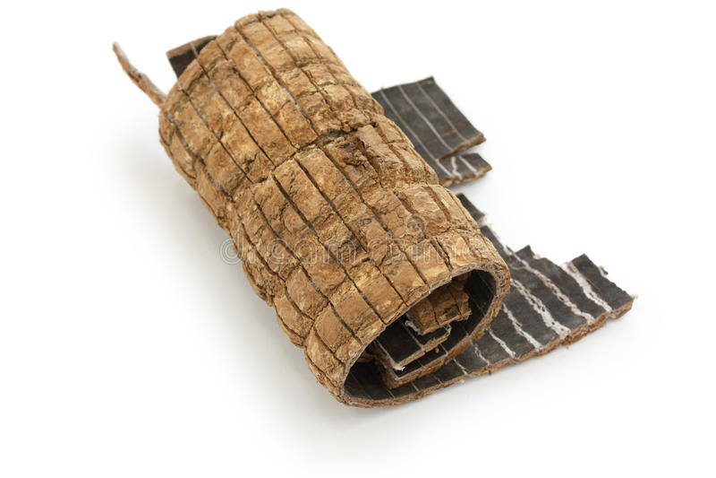Du zhong, eucommia bark, traditional chinese herba royalty free stock photo