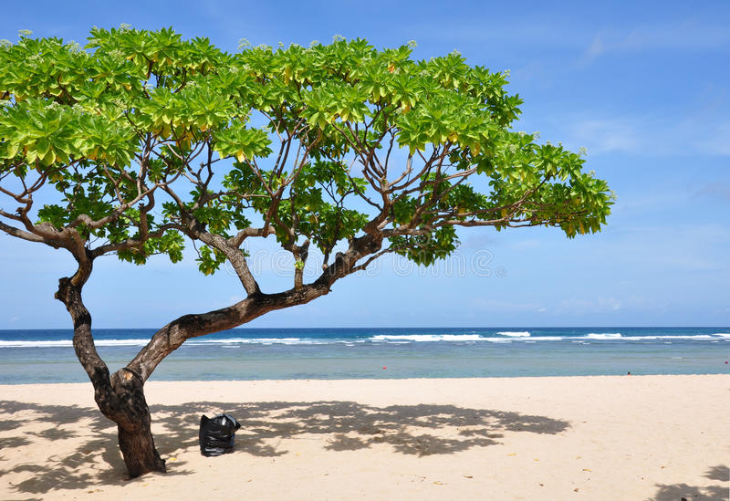 dua plażowy drzewo Nusa obraz stock