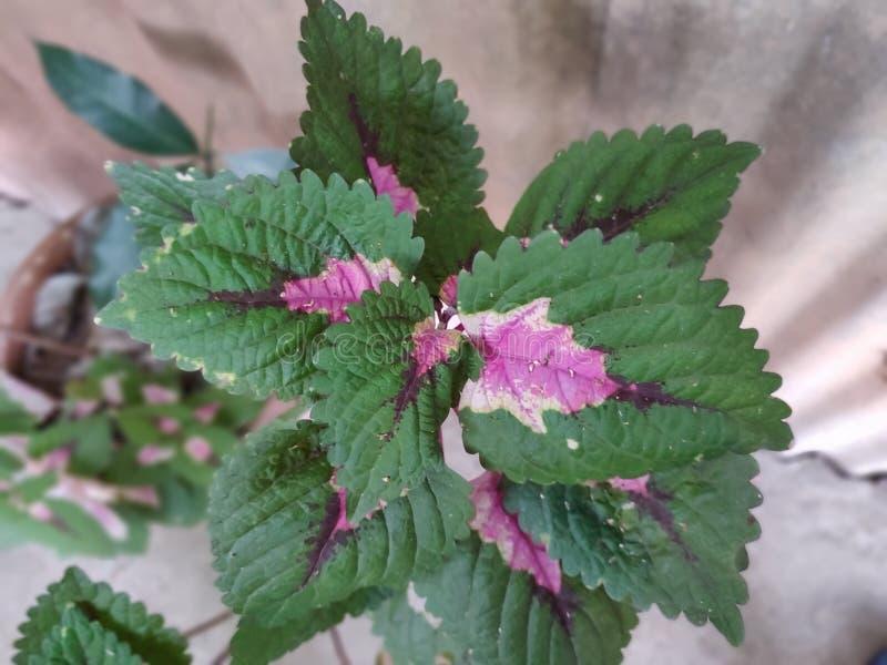 Dual color leaf stock photos