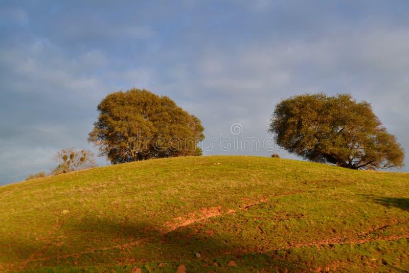 Duas árvores imagens de stock