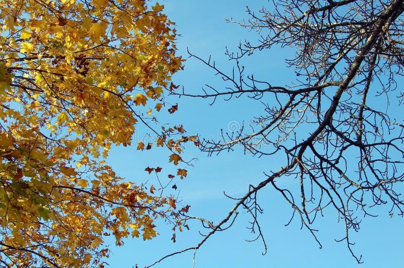 Duas árvores imagem de stock royalty free