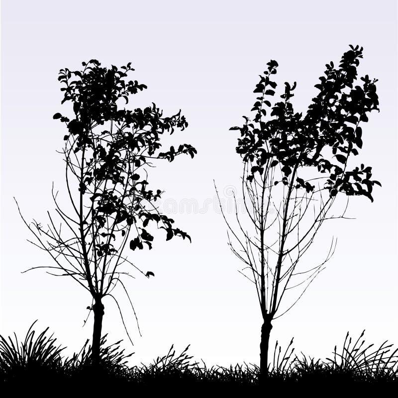 Duas árvores ilustração royalty free