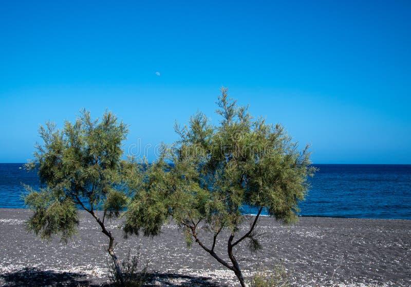 Duas árvores da praia imagem de stock royalty free