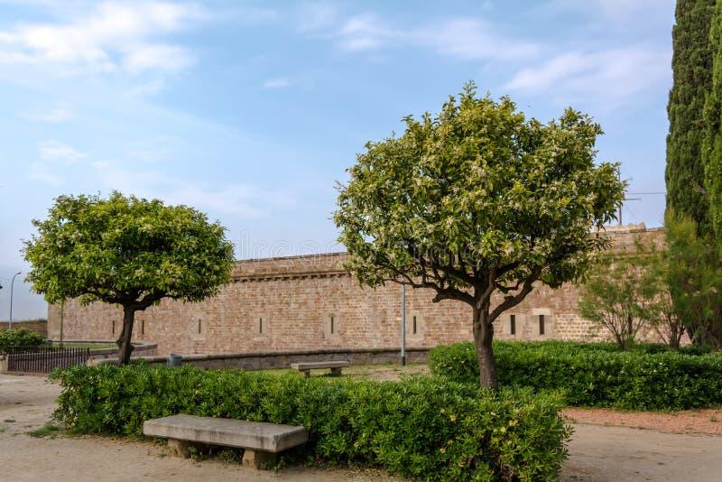 Duas árvores de citrino e um banco de pedra no parque foto de stock