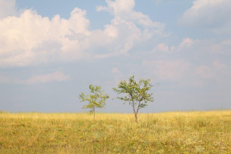 Duas árvores em um grande campo contra um céu azul e nuvens imagem de stock