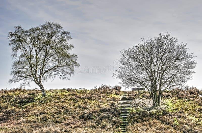 Duas árvores em uma inclinação foto de stock royalty free
