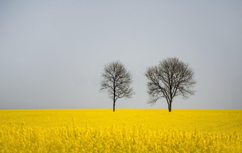 Duas árvores leafless em um campo da violação foto de stock
