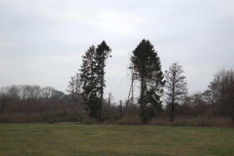 Duas árvores na extremidade de um campo de grama imagens de stock royalty free