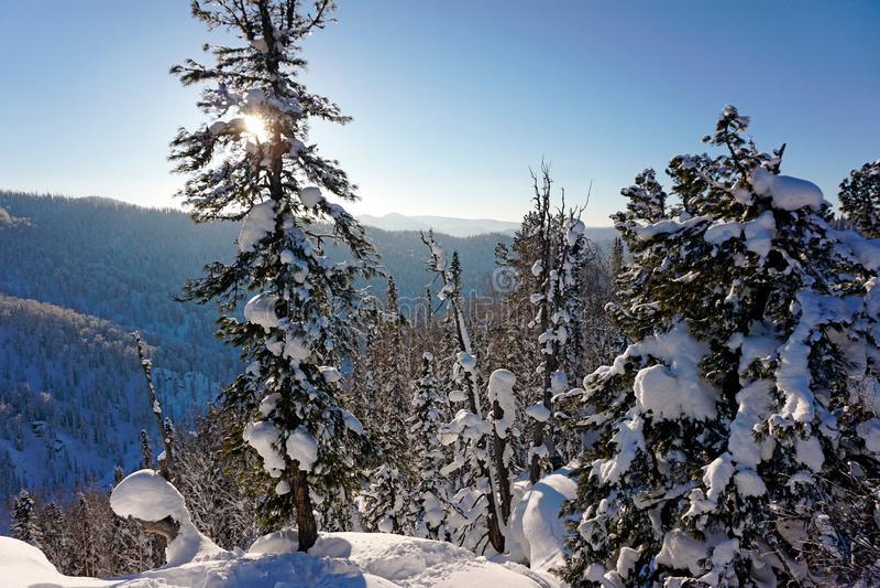 Duas árvores na neve, montanhas no inverno imagem de stock royalty free