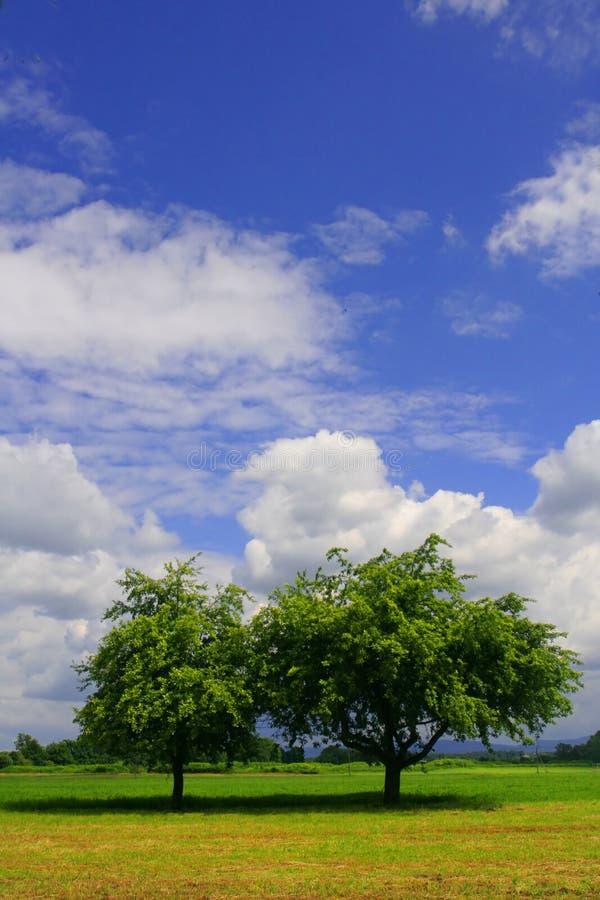 Duas árvores no acre foto de stock royalty free