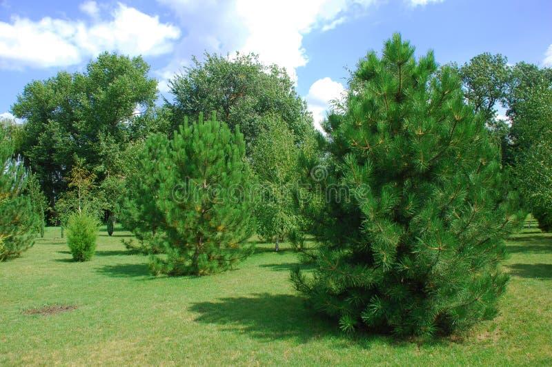 Duas árvores verdes no primeiro plano fotos de stock