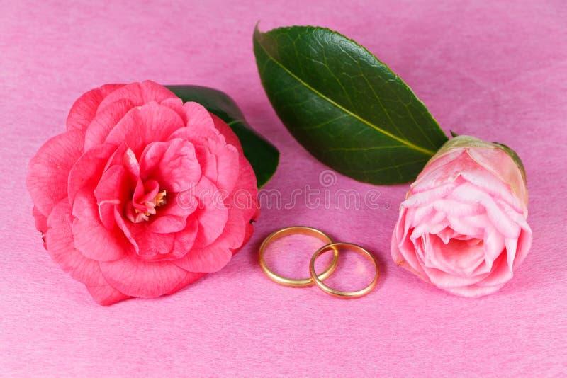 Duas alianças de casamento e flores cor-de-rosa da camélia fotos de stock