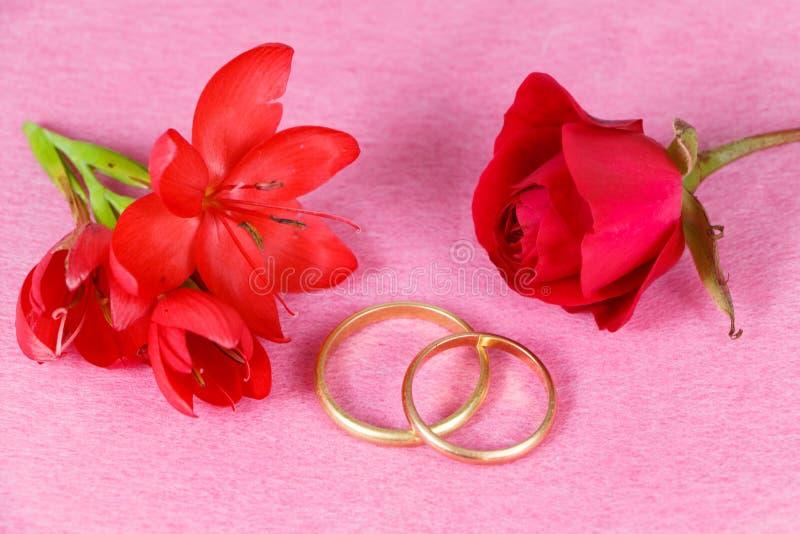 Duas alianças de casamento e rosa e flores vermelhas fotos de stock
