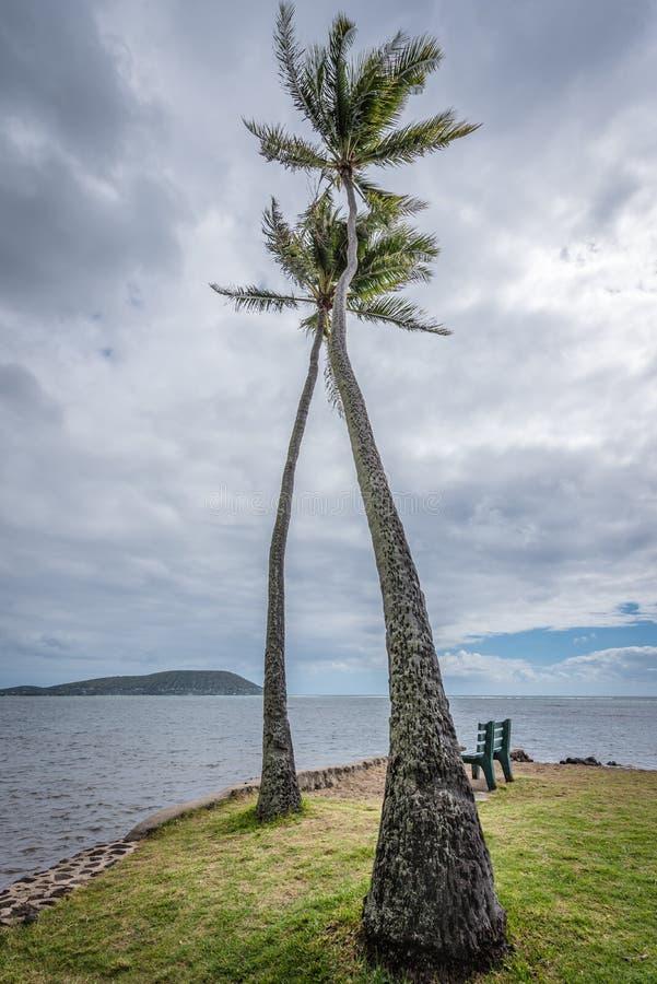 Duas altas, palmeiras torcidas no parque da praia de Kawaikui em Oahu, Havaí imagem de stock royalty free