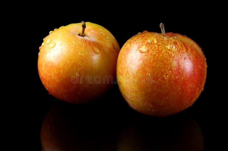 Duas ameixas frescas fotografia de stock