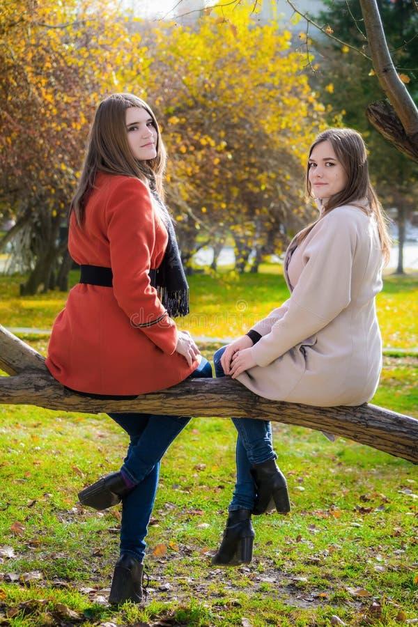 Duas amigas alegres estão sentando-se em um ramo de árvore na paridade imagem de stock royalty free
