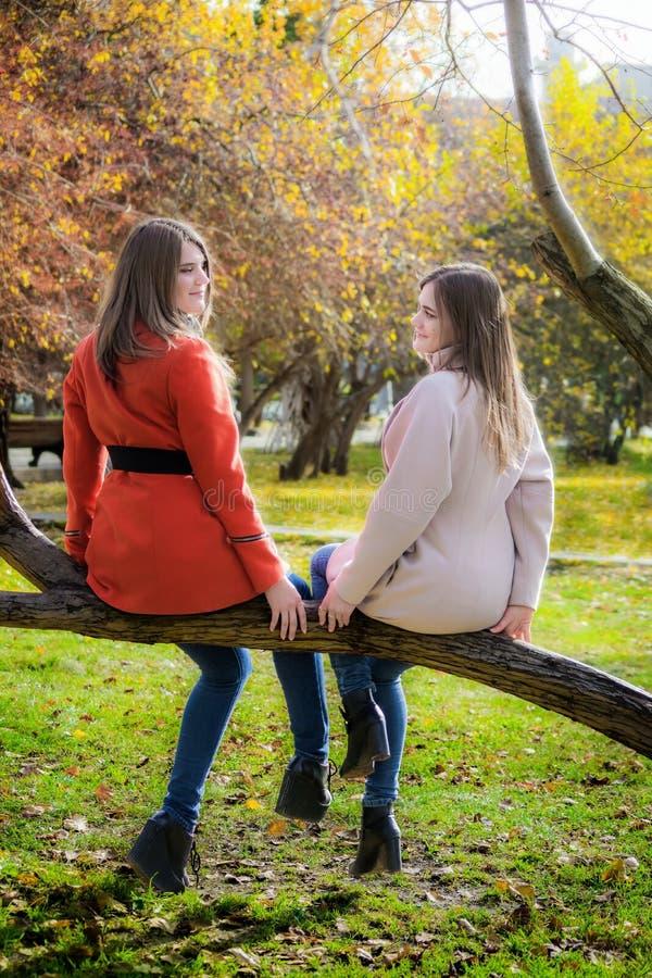 Duas amigas alegres estão sentando-se em um ramo de árvore no parque imagem de stock