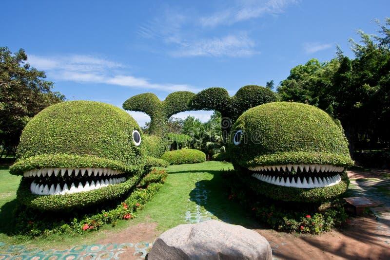 Duas baleias do arbusto imagem de stock royalty free