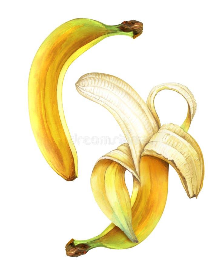 Duas bananas maduras da aquarela isoladas no fundo branco ilustração royalty free