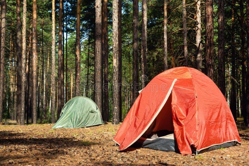 Duas barracas na floresta ensolarada do pinho na manhã imagens de stock