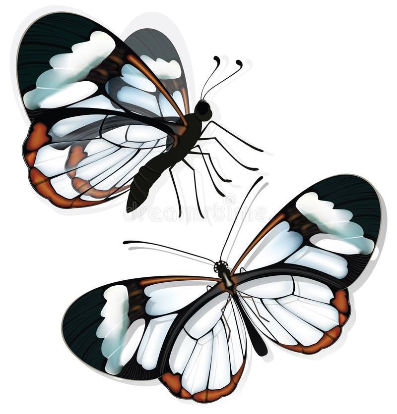 Duas borboletas com asas transparentes imagem de stock royalty free