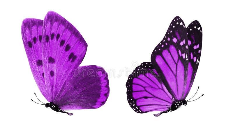 Duas borboletas roxas bonitas isoladas no fundo branco foto de stock royalty free