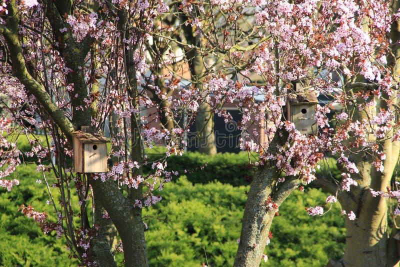 Duas casas do pássaro no tronco da árvore com flor cor-de-rosa foto de stock