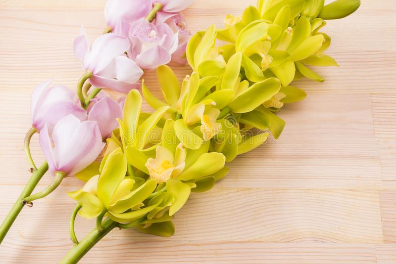 Duas cores de flores da orquídea foto de stock