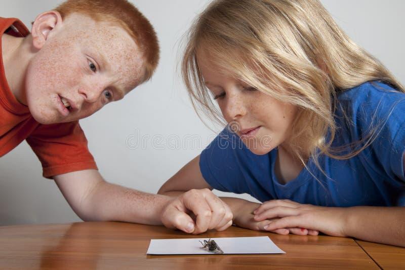 Duas crianças observando o erro imagem de stock