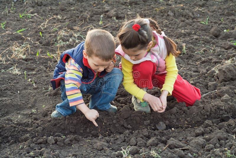 Duas crianças pequenas que plantam sementes no campo foto de stock royalty free