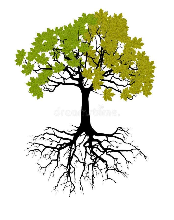 Duas estações - mola, verão Árvore da arte bonita para seu projeto Ilustração do vetor ilustração do vetor