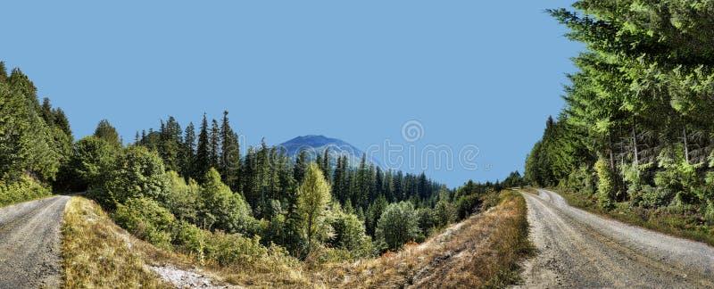 Duas estradas de terra no panorama das madeiras fotos de stock