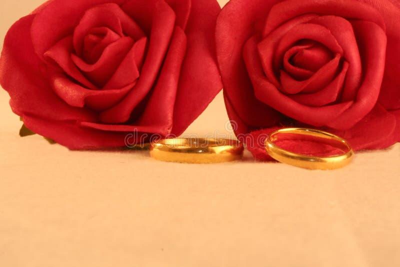 Duas faixas de casamento do ouro e rosas vermelhas fotografia de stock royalty free