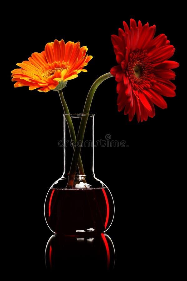 Duas flores imagem de stock royalty free
