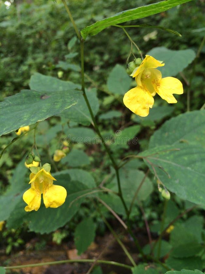 Duas flores amarelas foto de stock
