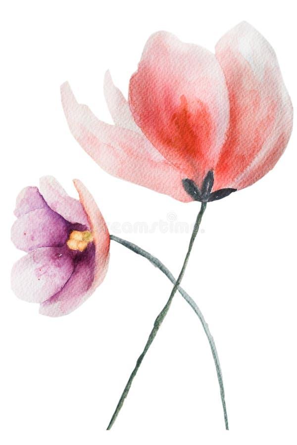 Duas flores bonitas ilustração stock