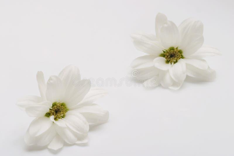 Download Duas flores brancas foto de stock. Imagem de dois, arte - 112686