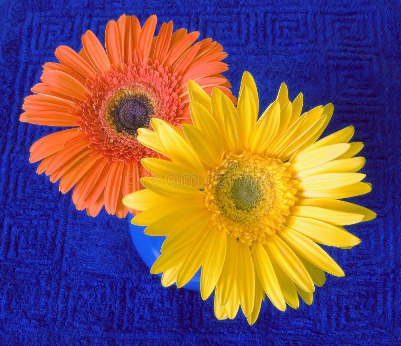 Duas flores brilhantes foto de stock royalty free