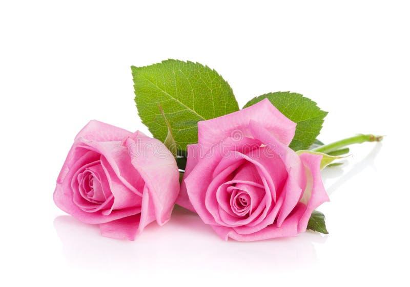 Duas flores da rosa do rosa foto de stock royalty free