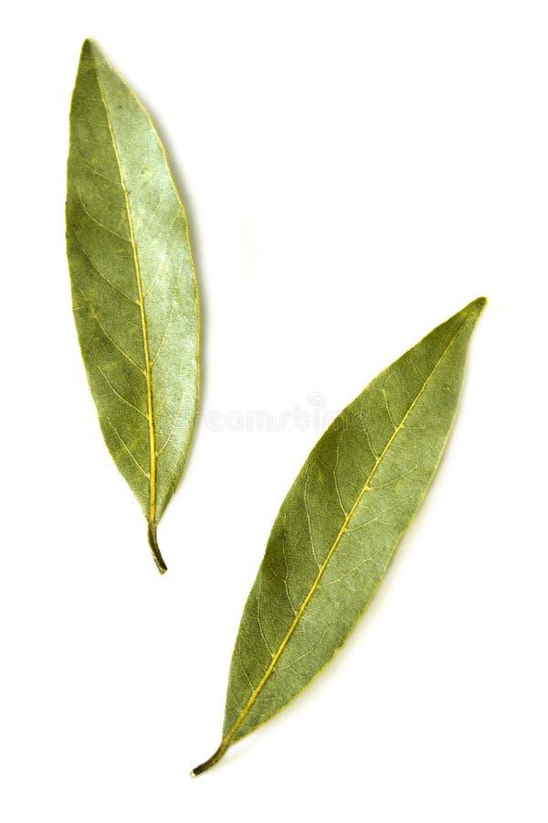 Duas folhas de louro secadas foto de stock royalty free