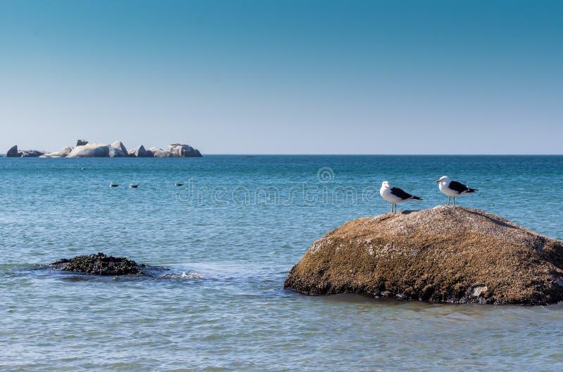 Duas gaivotas em uma rocha na praia - imagem imagens de stock royalty free