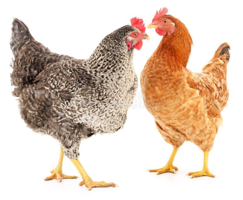 Duas galinhas imagens de stock royalty free