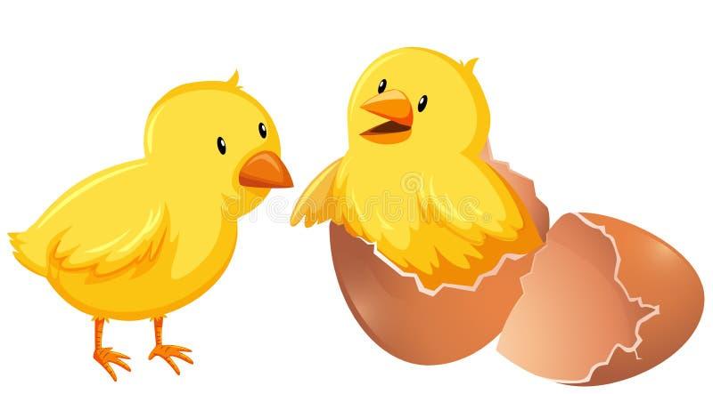 Duas galinhas novas no shell ilustração stock