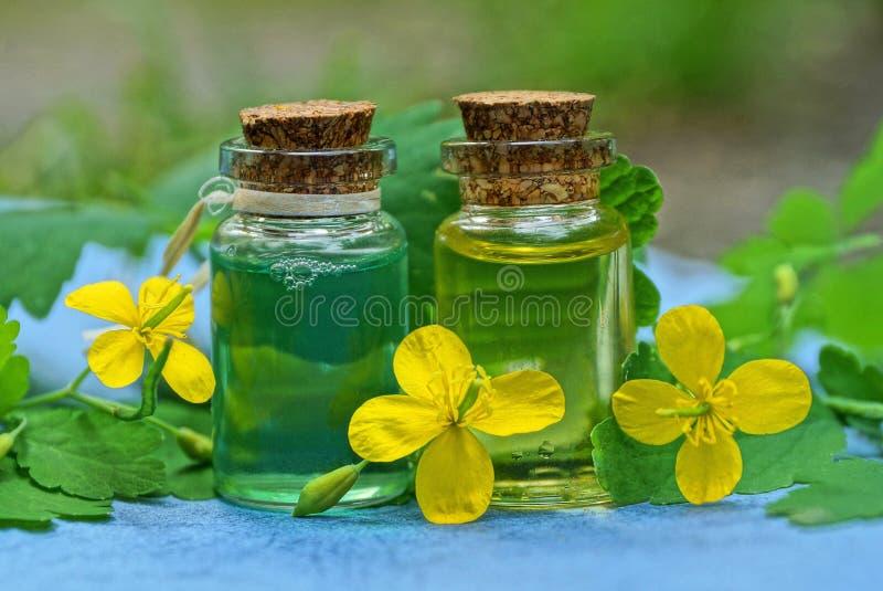 Duas garrafas de vidro pequenas com óleo com flores amarelas e as folhas verdes do celandine imagem de stock royalty free