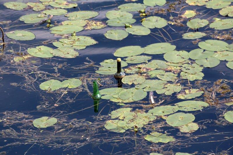 Duas garrafas de vidro que flutuam no rio local cercado com folhas verdes e ramos caídos foto de stock
