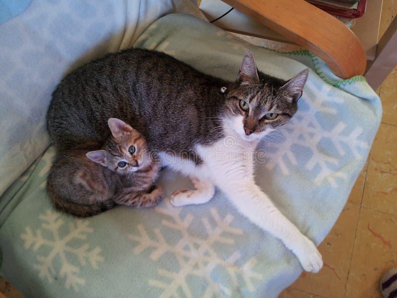 Duas gerações do gato foto de stock
