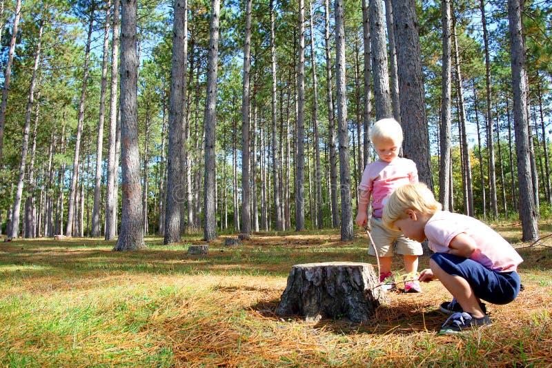 Duas jovens crianças que exploram na floresta do pinheiro fotografia de stock