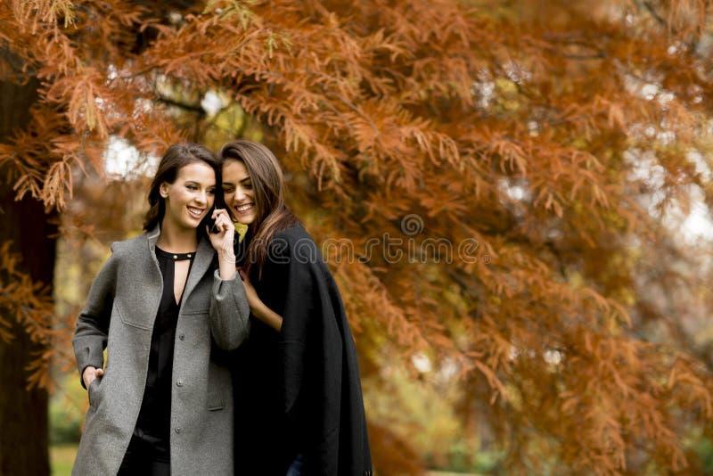 Duas jovens mulheres bonitas que usam o telefone celular na floresta do outono fotos de stock royalty free