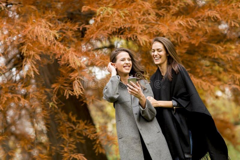 Duas jovens mulheres bonitas que usam o telefone celular na floresta do outono imagens de stock