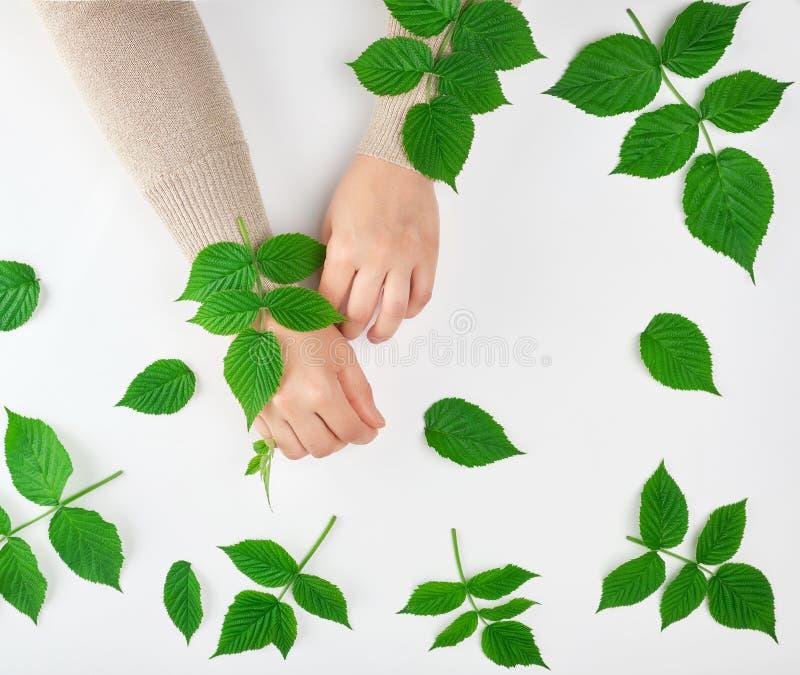duas mãos fêmeas e folhas verdes, vista superior, conceito de procedimentos antienvelhecimento foto de stock royalty free